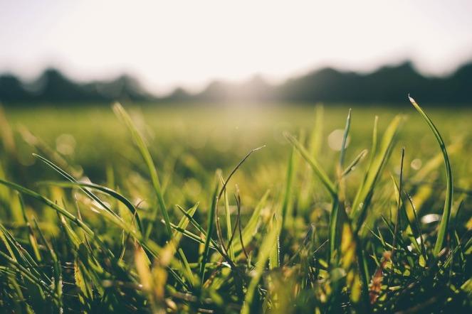 grass-916407_960_720